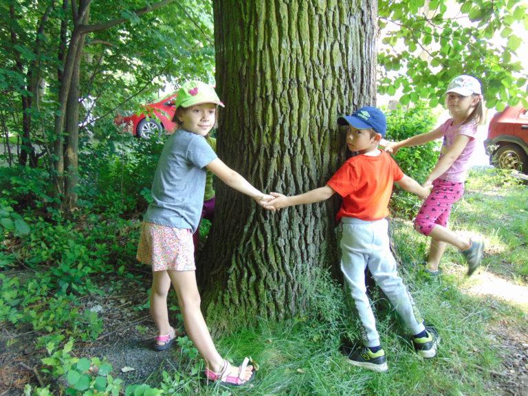 Ekologický kroužek v lese